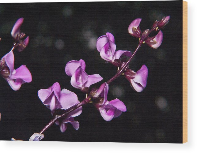 Sweet Wood Print featuring the photograph Sweet Pea Morning by Douglas Barnett