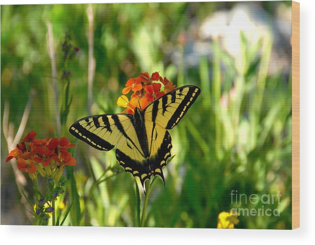 Tiger Tail Butterfly Wood Print featuring the photograph Tiger Tail Beauty by David Lee Thompson
