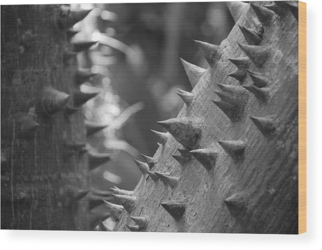 Spike Wood Print featuring the photograph Tree With Spikes And Thorns by Rob Hans