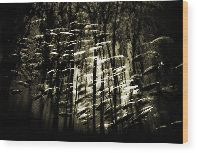 Digital Photography Wood Print featuring the photograph Untitled 2 by Tony Wood