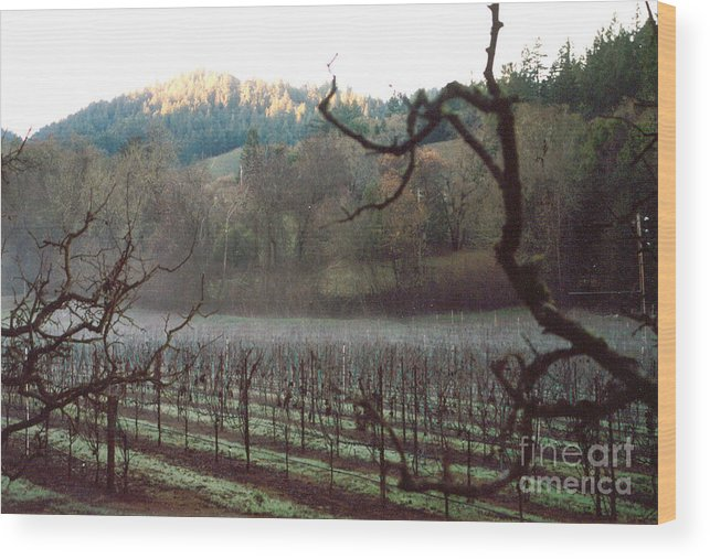Vineyard Wood Print featuring the photograph Vineyard In The Winter by PJ Cloud