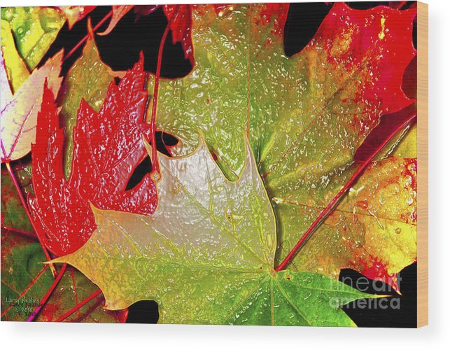 Leaves Wood Print featuring the photograph Wet Leaves Of Fall by Larry Keahey