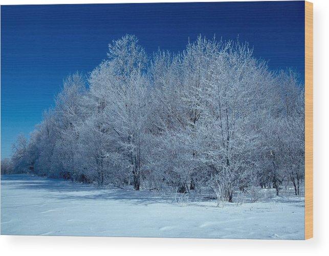 Winter Wood Print featuring the photograph Winter Scene by Raju Alagawadi