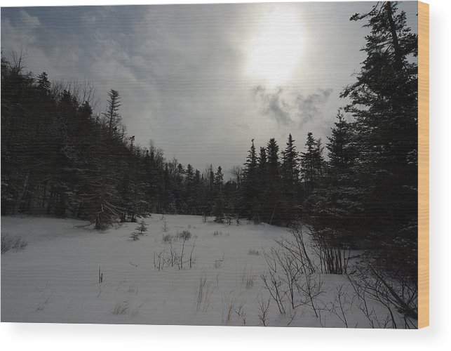 Nature Wood Print featuring the photograph Winter Woods by Eric Workman