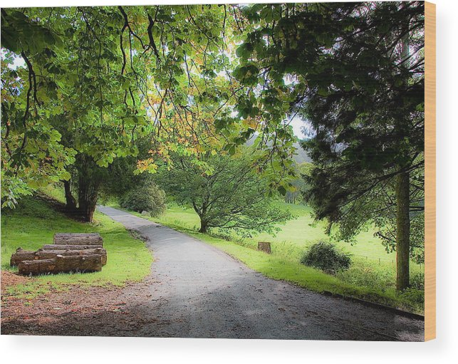 Road Wood Print featuring the photograph Road To The Forest by Nataliya Pergaeva