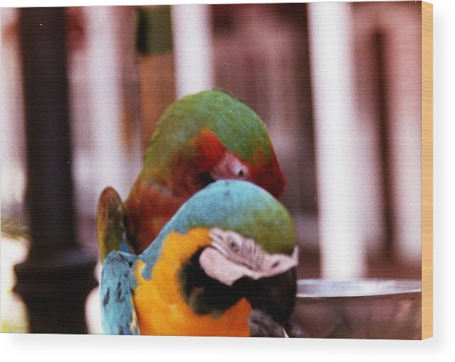 Parrots Wood Print featuring the photograph 2 Birds by Karl Rose