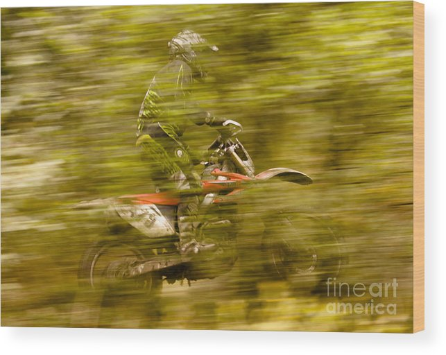 Wood Print featuring the photograph Through The Woods by Angel Ciesniarska