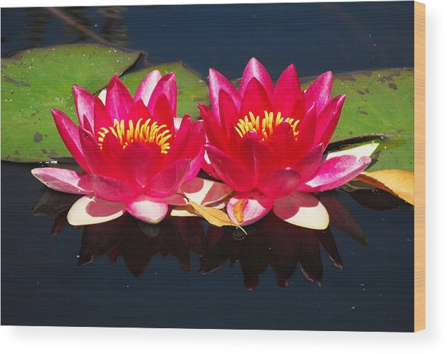 Flowers Wood Print featuring the photograph Water-lily by Bill Brown