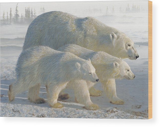 Polar Bear Wood Print featuring the drawing A Chill Wind by Brent Ander