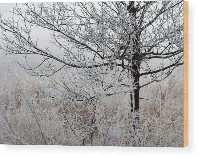 Frost Wood Print featuring the photograph A Foggy Frosty December Morning by Carolyn Fletcher