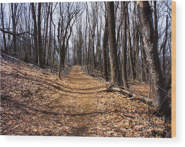 Landscape Wood Print featuring the photograph A Lonely Road by Rafael Quirindongo