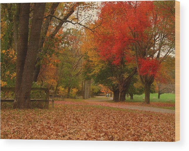Autumn Wood Print featuring the photograph A Walk In Autumn - Holmdel Park by Angie Tirado