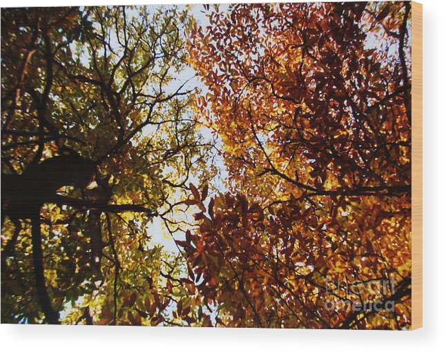 Autumn Chestnut Canopy Wood Print featuring the photograph Autumn Chestnut Canopy  by Martin Howard