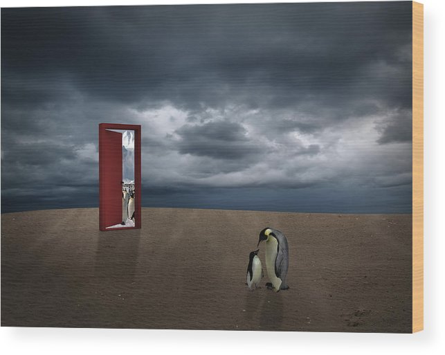 Penguin Wood Print featuring the digital art Decision Of Penguin by Fitim Bushati