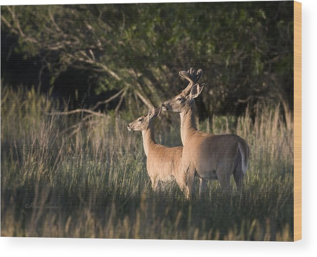 Beautiful Wood Print featuring the photograph Deer By Belfry Montana by Roger Snyder