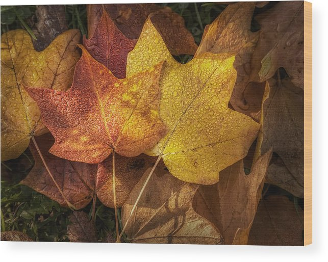 Leaf Wood Print featuring the photograph Dew On Autumn Leaves by Scott Norris