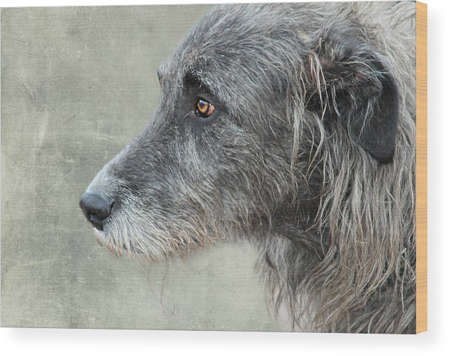 Dog Wood Print featuring the photograph dog by Heike Hultsch
