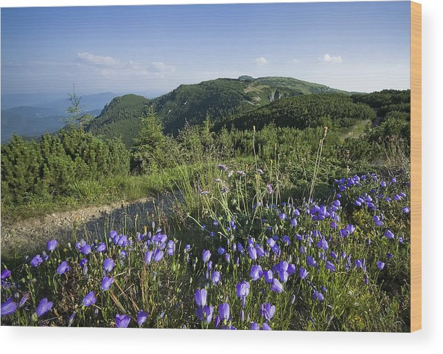 Beauty Wood Print featuring the photograph Flowers On Summer Mountain by Ioan Panaite