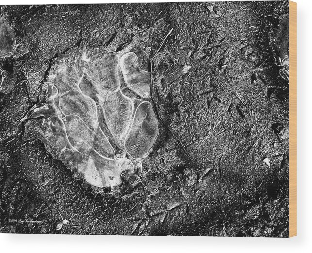 Ice Photograph Wood Print featuring the photograph Ice Graffiti by Lucy VanSwearingen