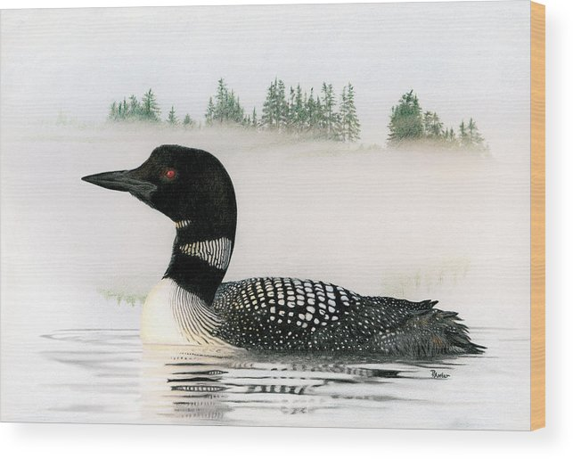 Loon Wood Print featuring the drawing Loon In Fog by Brent Ander