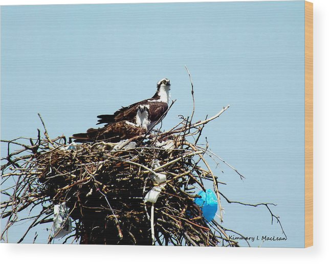 Animal Wood Print featuring the photograph Osprey Couple by Kimmary MacLean