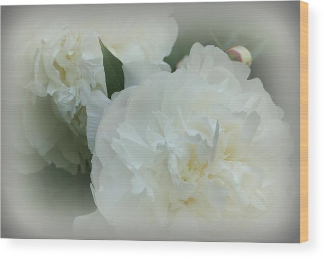Flowers Wood Print featuring the photograph Peony Soft by Barbara S Nickerson