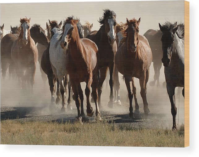 Horses Wood Print featuring the photograph Running Free by Lee Raine