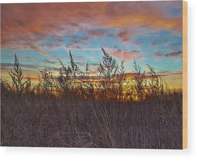 Rocks Wood Print featuring the photograph Sea Fields by Andrea Galiffi