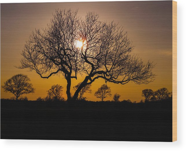 A Nice Silhouette During A Cold Day In Amagansett Ny Wood Print featuring the photograph Silueta by Fabian Rodriguez