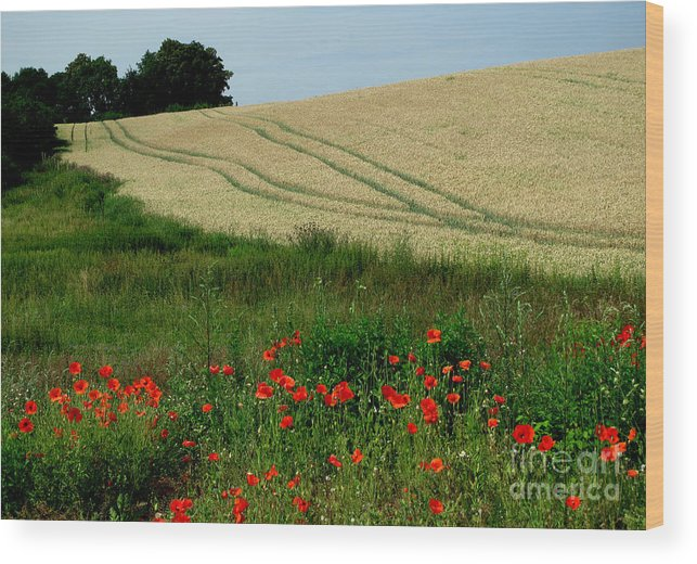 Poppy Wood Print featuring the photograph Summer Time by Monika A Leon