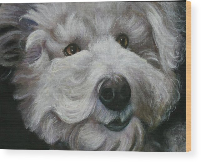 Dogs Wood Print featuring the painting Teddy The Bichon by Melinda Saminski
