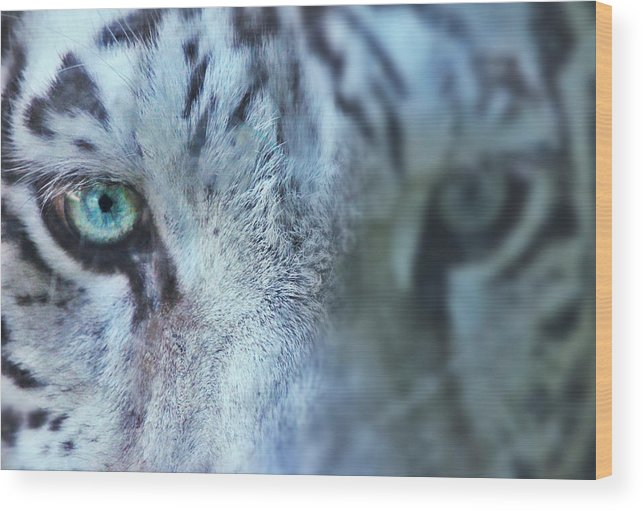 Tiger Wood Print featuring the photograph Tiger Stare by Kyle Ferguson