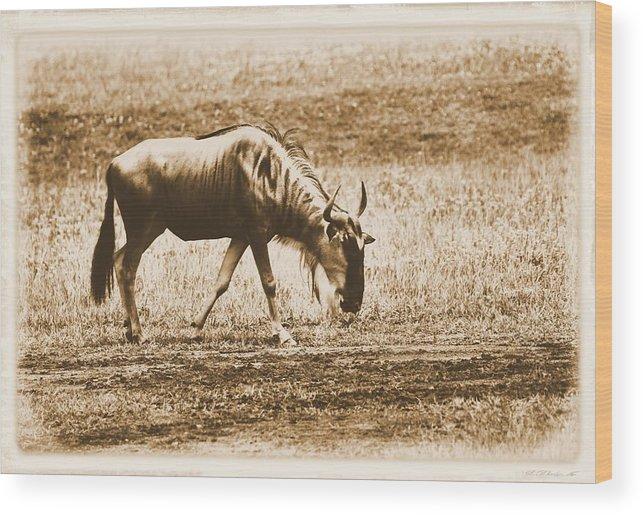 Vintage African Safari Wildebeest Wood Print featuring the photograph Vintage African Safari Wildbeest by Dan Sproul