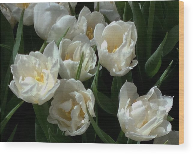 Garden Wood Print featuring the photograph White Tulips In The Garden by Jan Moore