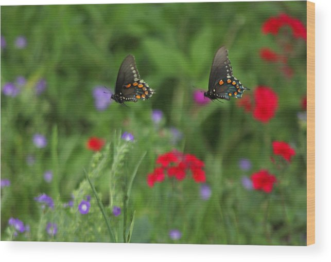 Wood Print featuring the photograph Butterfly Chase by Susan Rovira