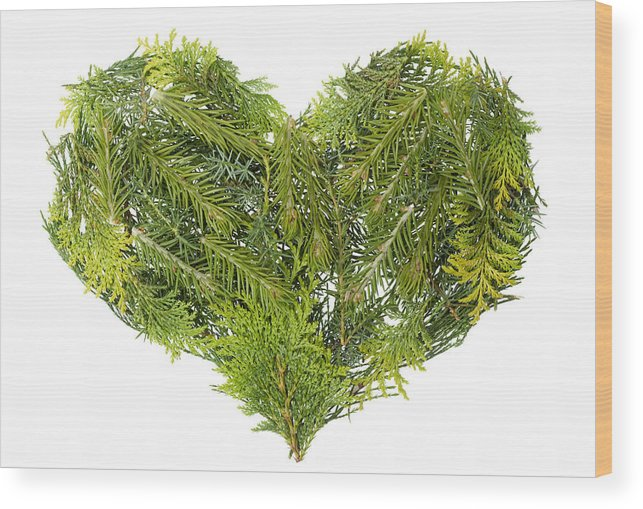Heart Wood Print featuring the photograph Evergreen Coniferous Christmas Trees Heart Isolated by Aleksandr Volkov