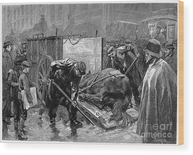 1888 Wood Print featuring the photograph New York: Aspca, 1888 by Granger