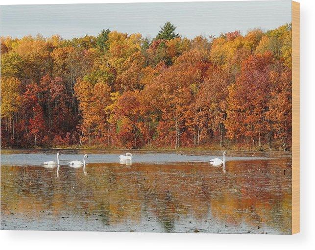 Autumn Wood Print featuring the photograph Reflections Of Autumn by Amalia Jonas