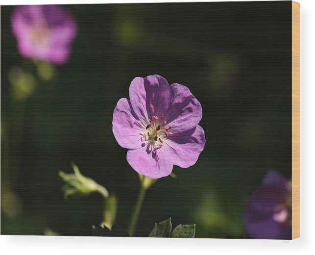 Floral Wood Print featuring the photograph Woodland Blooms by Katherine White
