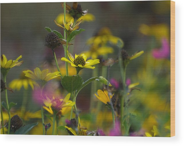 Ann Keisling Wood Print featuring the photograph Field Of Flowers by Ann Keisling