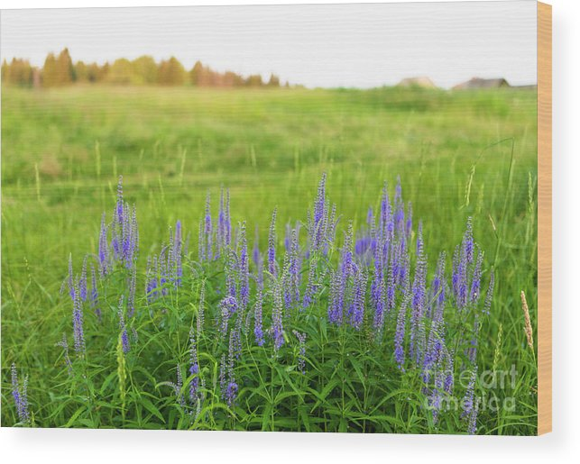 Meadow Wood Print featuring the photograph Meadow Flowers by Edward Nekrasov