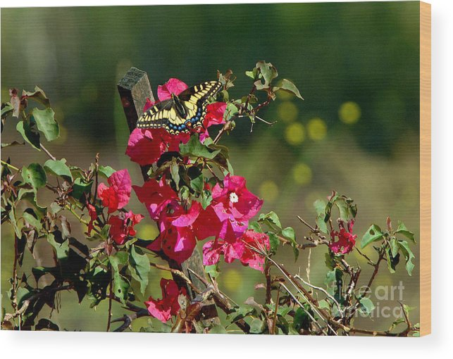 Butterfly Wood Print featuring the photograph Butterfly by Marc Bittan