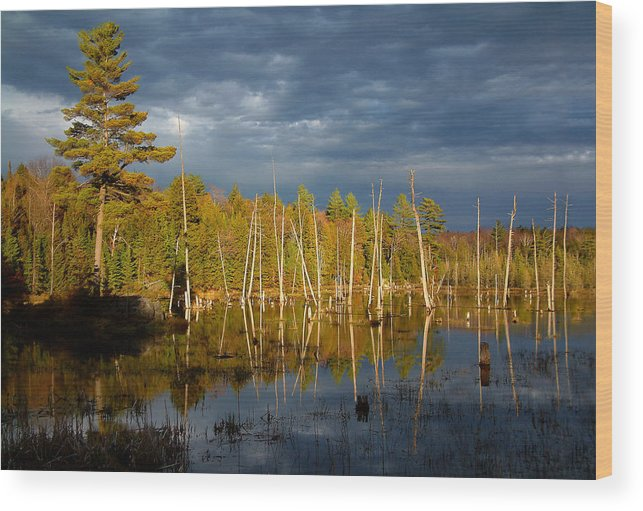 Wetlands Wood Print featuring the photograph A Fleeting Sunset Moment by Linda McRae