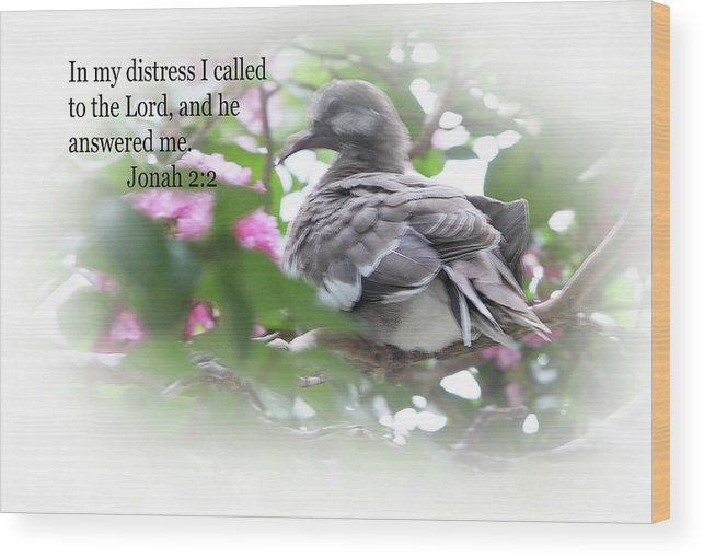 Scripture Wood Print featuring the photograph Baby Dove Jonah 2 V 2 by Linda Phelps