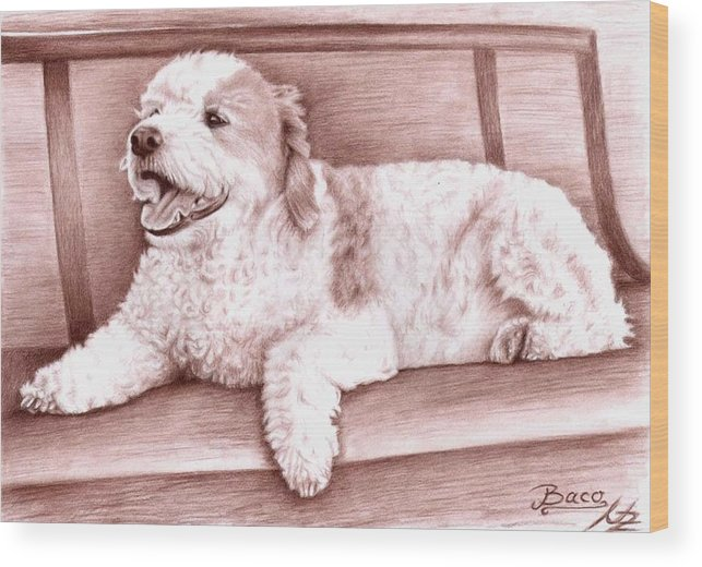Dog Wood Print featuring the drawing Baco by Nicole Zeug