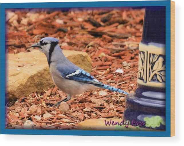 Bird Wood Print featuring the photograph Bluejay Profile by Wendy Fox