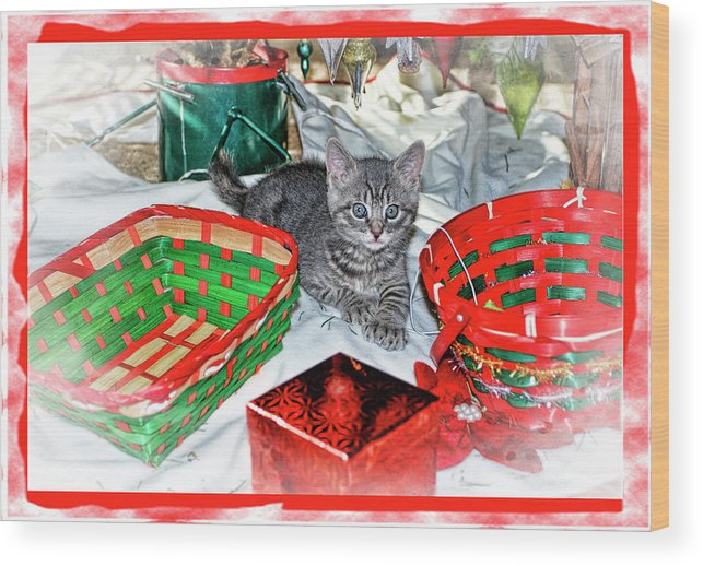 Recent Wood Print featuring the photograph Christmas Kitten by Geraldine Scull