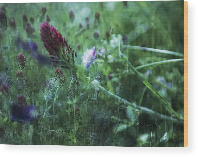 Red Clover Wood Print featuring the photograph Clover Field Remix by Sheryl Karas