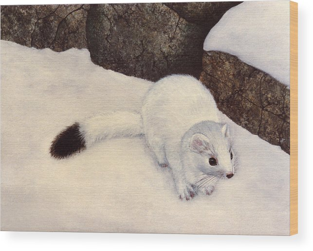 Wildlife Wood Print featuring the painting Ermine In Winter by Frank Wilson