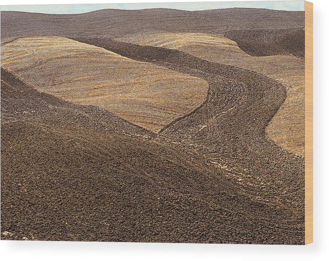 Tuscany Wood Print featuring the photograph Fields Of Tuscany by T Monticello